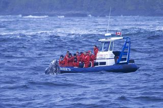 Tofino Whale Photo Oct 11